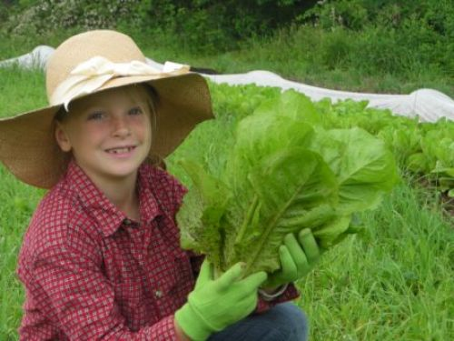 local farm vegetables, natural