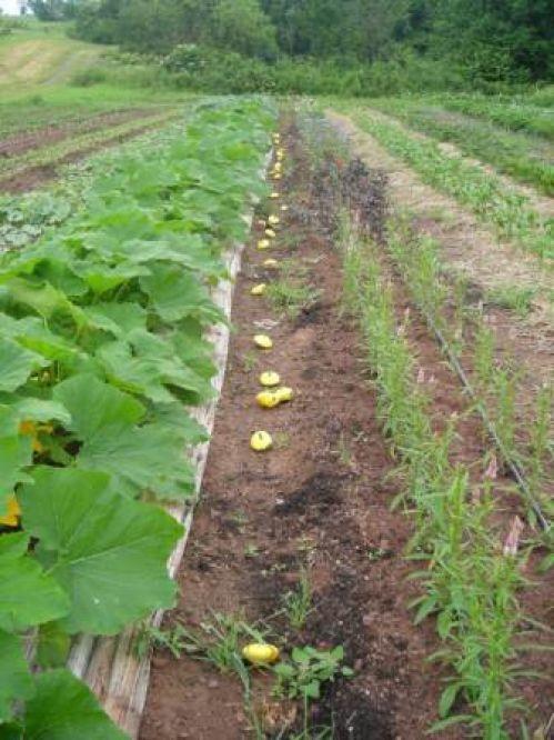 local farm, natural, vegetables